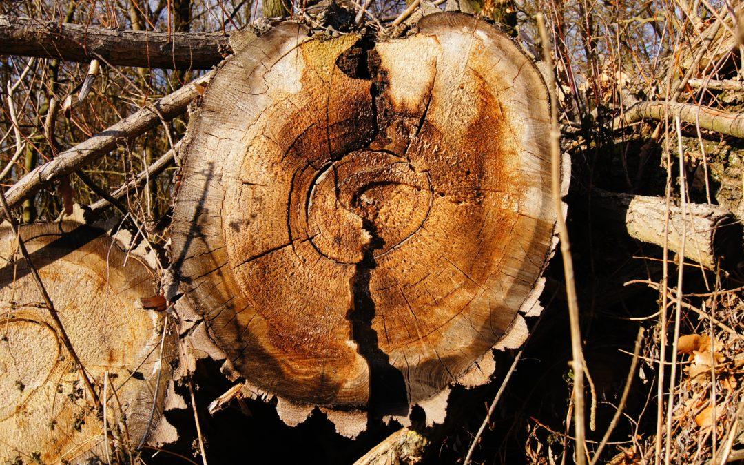 annual rings, wood, tree