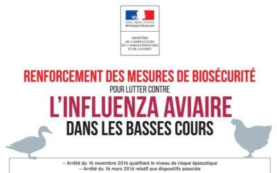 Influenza aviaire : passage au niveau «risque élevé»